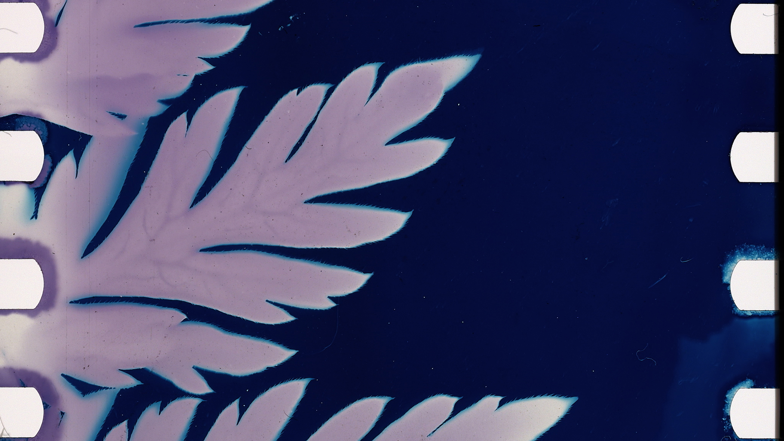Athyrium filix-femina, Kelly Egan, 2016, color, handmade cyanotype emulsion, 5 minutes
